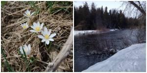 river paddle 2